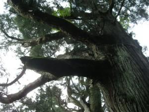 つくば山の樹木