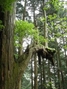 木の枝から木が生える